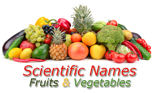 Name of Fruit Vegetable