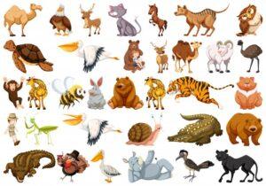 Animals GK